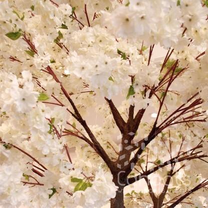 Cahoots Cherry Blossom Tree Hire